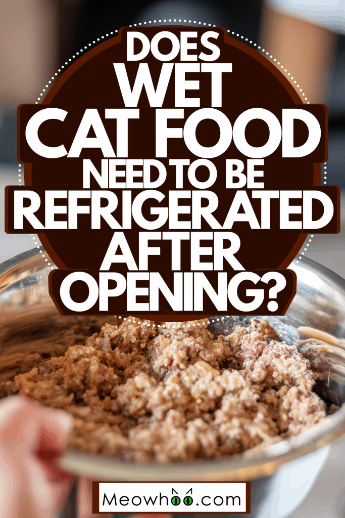 A woman holding a stainless steel bowl filled with cat food, Does Wet Cat Food Need To Be Refrigerated After Opening?
