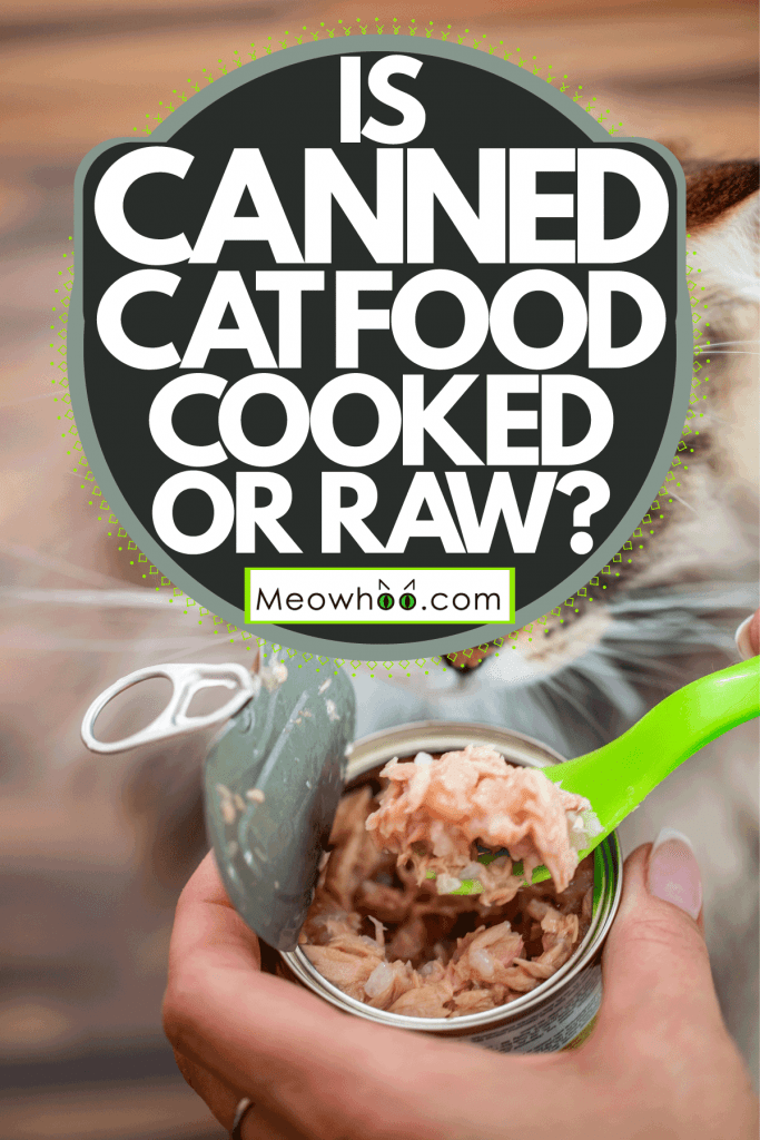 A woman scooping a freshly opened cat food, Is Canned Cat Food Cooked Or Raw?