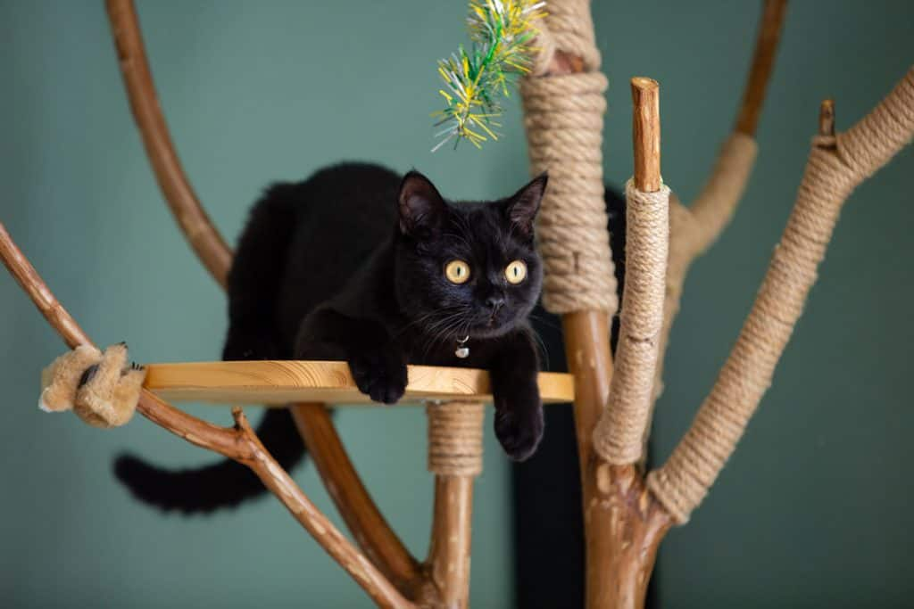 A black colored cat sitting on his wooden platform in his cat tree