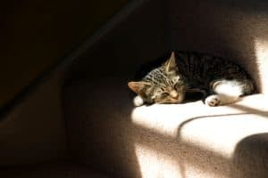 A cat sleeping on the sofa, Should You Leave A Light On For A Cat?