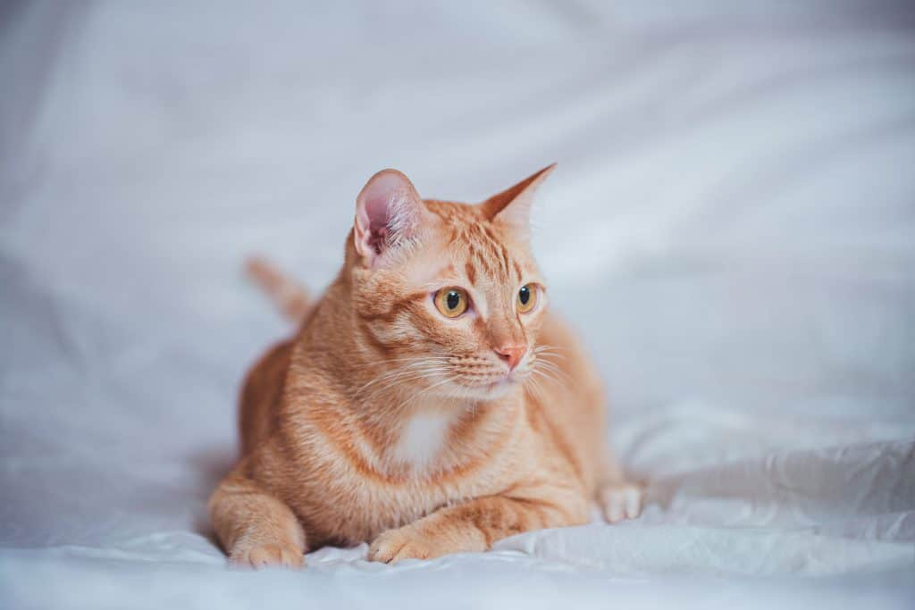 A cat startled after seeing a stranger