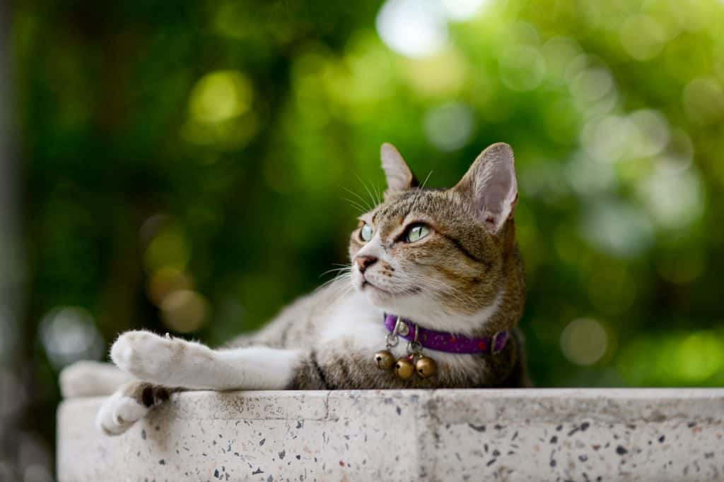 A cat with collar bells lying on the concrete