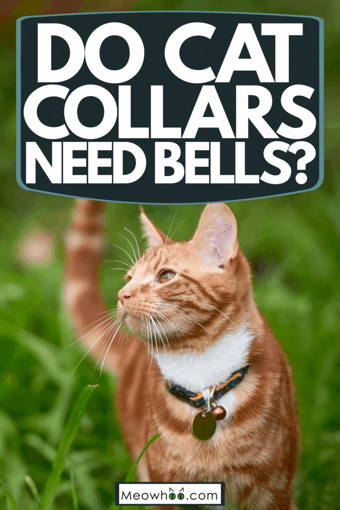 A ginger tabby cat wearing a collar bell, Do Cat Collars Need Bells?