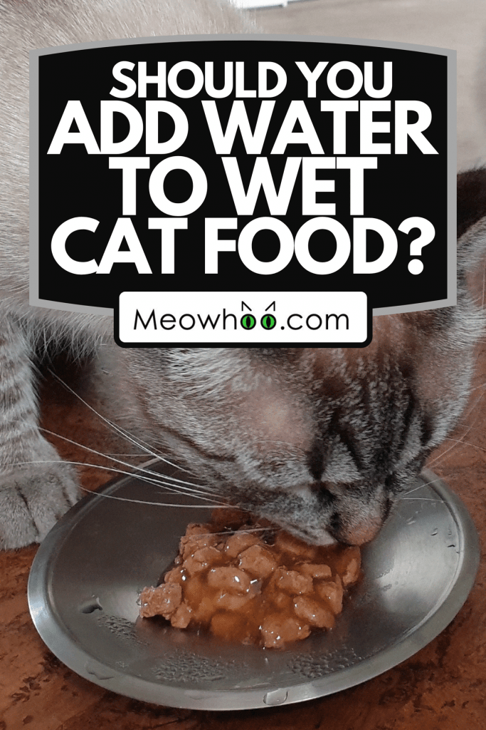 A young cat eating canned wet food, Should You Add Water To Wet Cat Food?