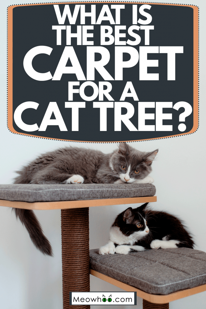 Two cats sleeping on their cat tree with gray carpet, What Is The Best Carpet For A Cat Tree?