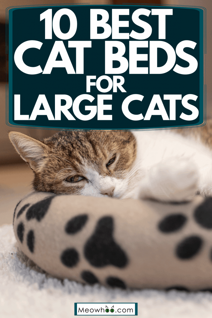 A cute cat relaxing on his cat bed with cat foot print designs inside a living room, 10 Best Cat Beds For Large Cats