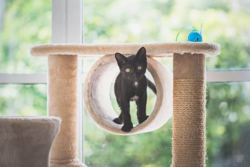 A cat standing in his small cat tree