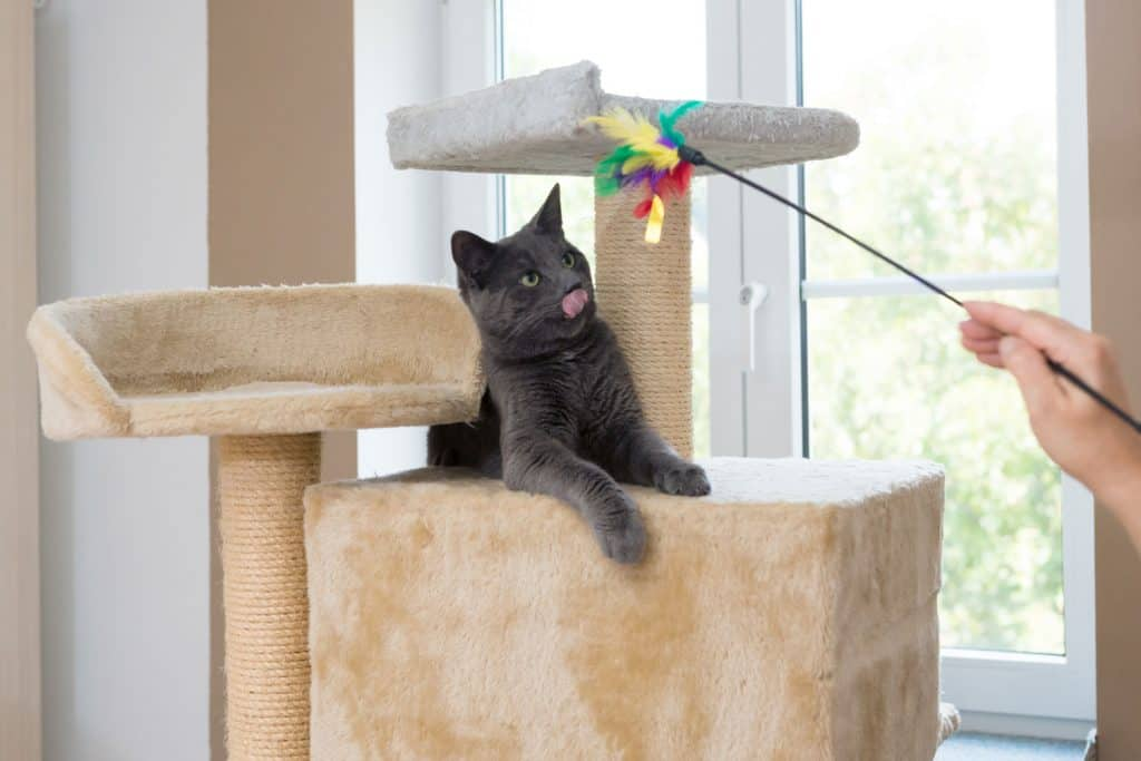 A domestic cat lying in his small cat tree and playing with his hooman