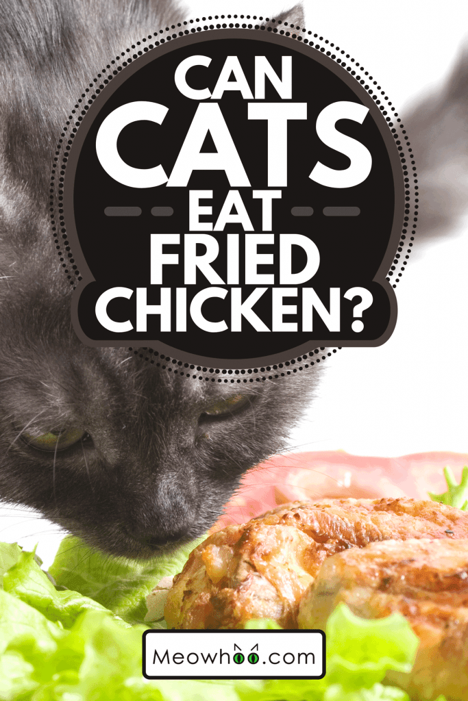 A beautiful young cat eating fried chicken wings, Can Cats Eat Fried Chicken?