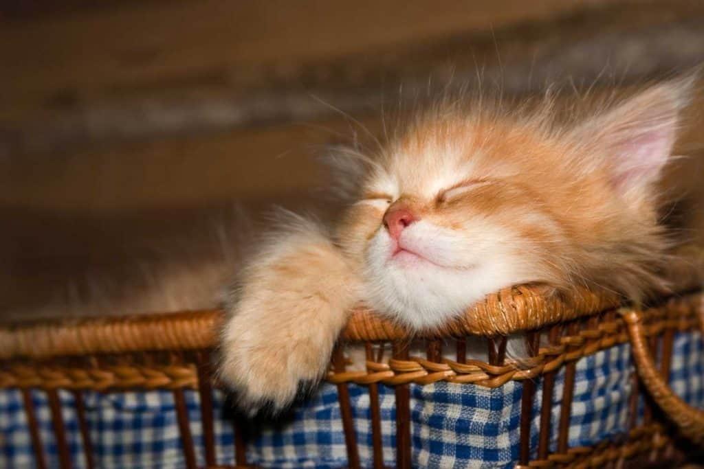 Cute kitten sleeping on its bed
