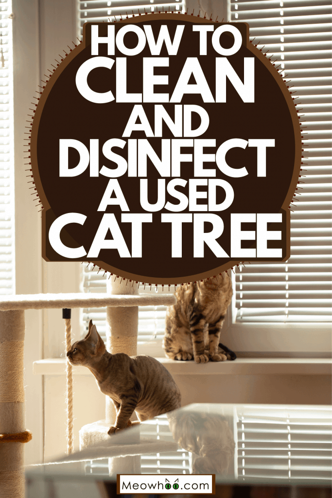 Two domestic cats sitting on top of their cat tree, How To Clean And Disinfect A Used Cat Tree