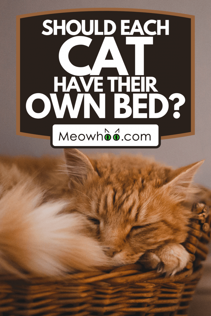 A domestic cat sleeping soundly in its bed in a residential home, Should Each Cat Have Their Own Bed?
