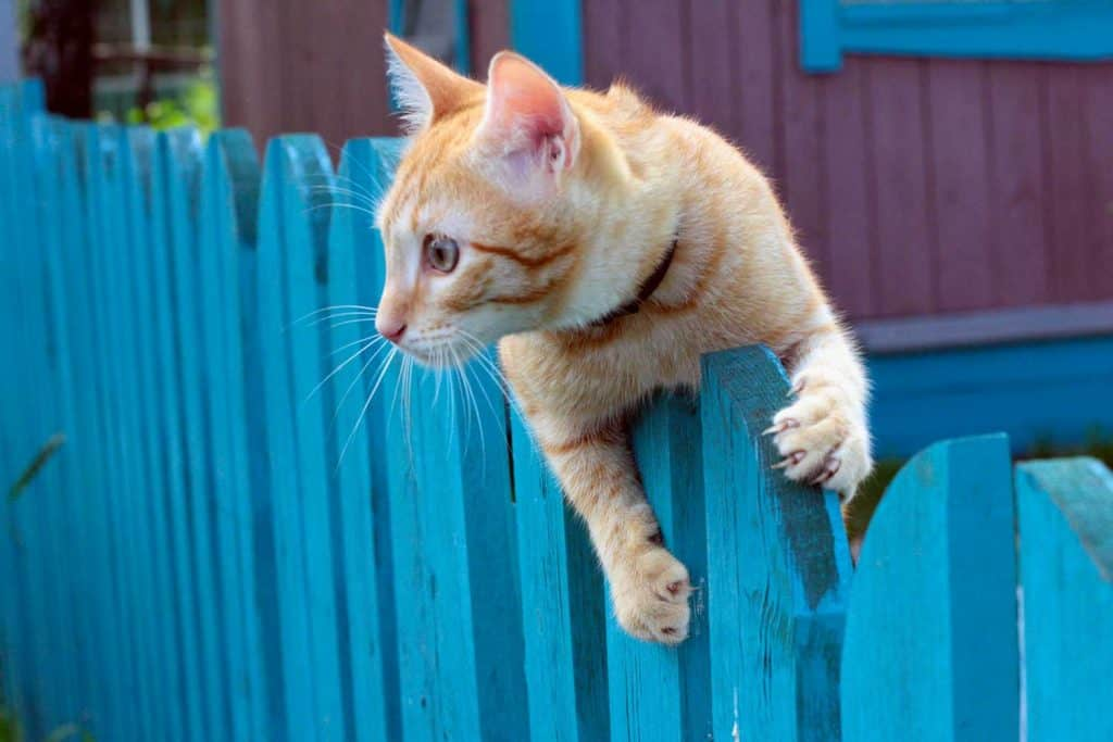 A cat with collar on a fencing