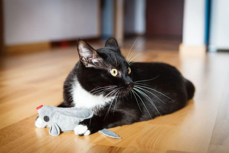 A cute domestic cat playing with his small little toy mouse on the floor, How Often Should You Replace Catnip In A Toy?