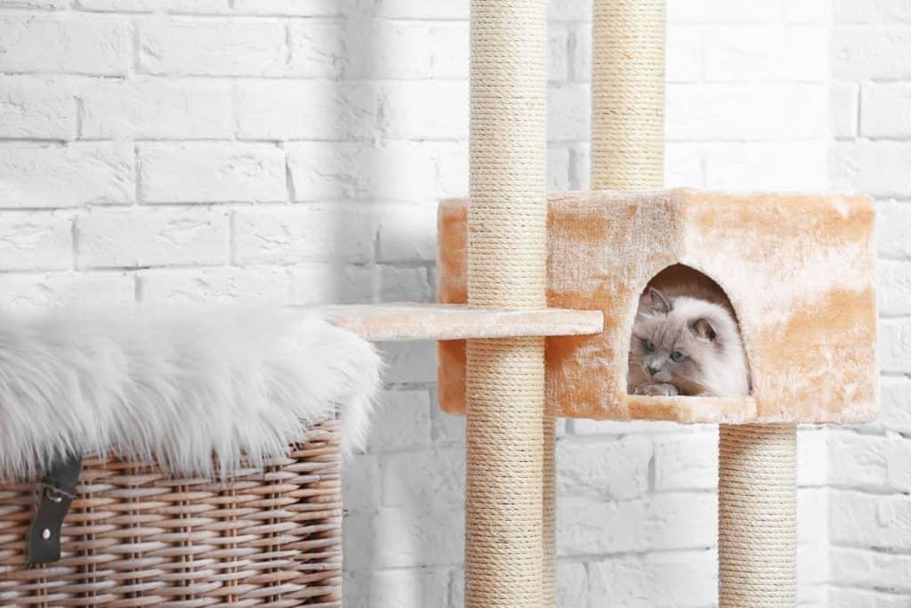 A cute kitten sleeping in his small house