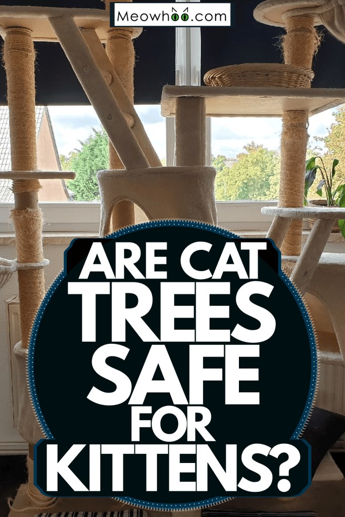 A huge cat tree inside a living room, Are Cat Trees Safe For Kittens?