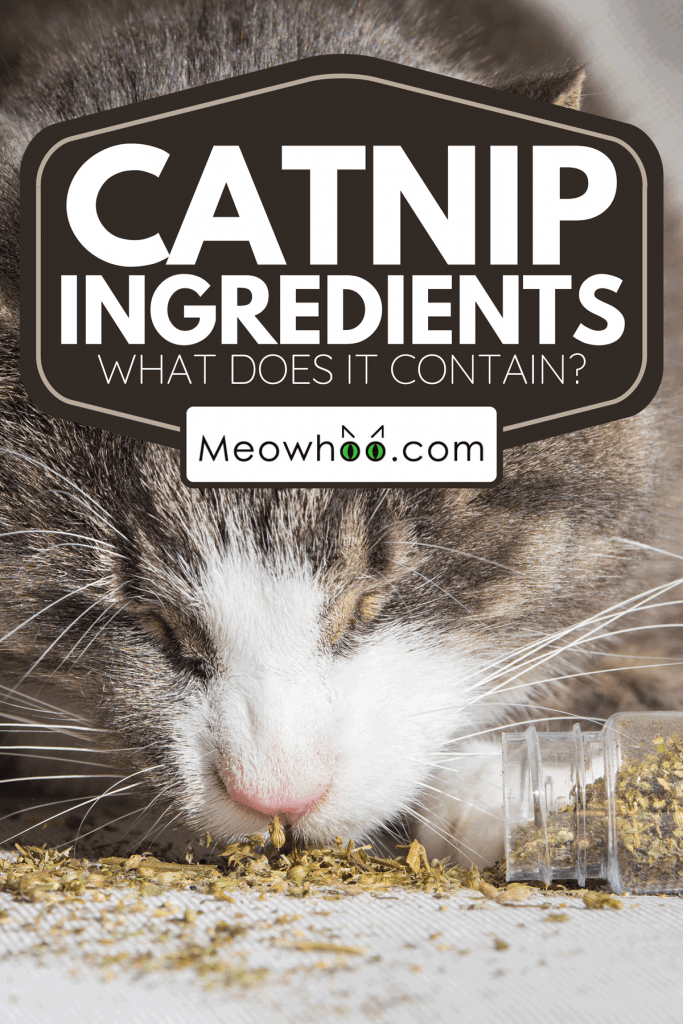A domestic cat eating and enjoying dried catnip, Catnip Ingredients: What Does It Contain?