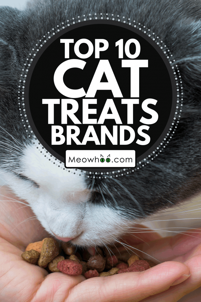 Cat eats food from the hand of owner, Top 10 Cat Treats Brands