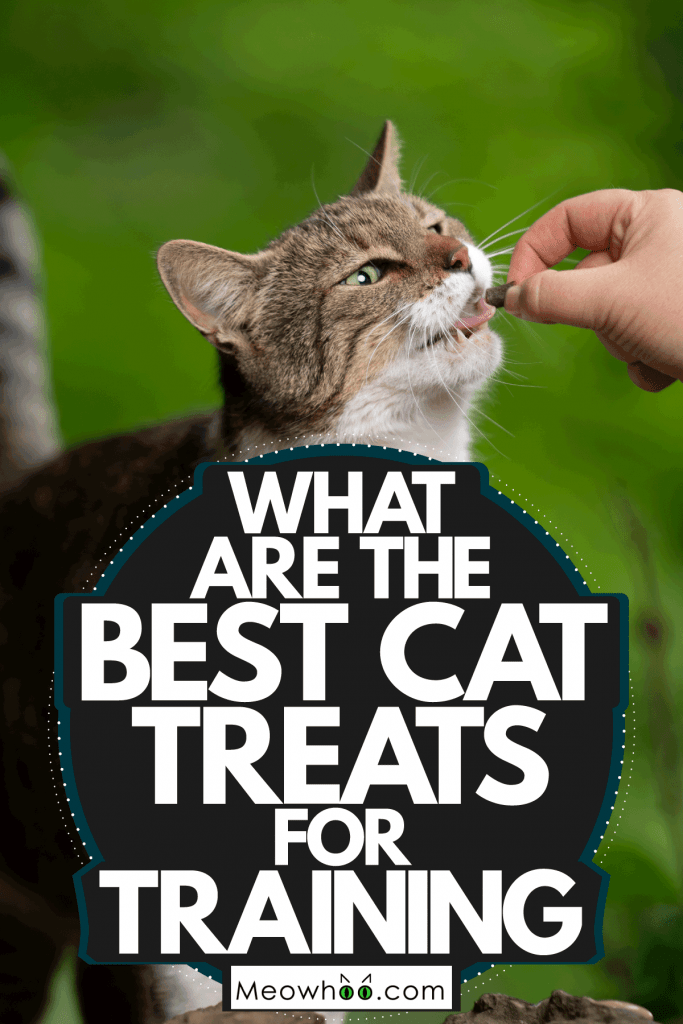 A woman feeding her cat some treats after having some exercise, What Are The Best Cat Treats For Training?