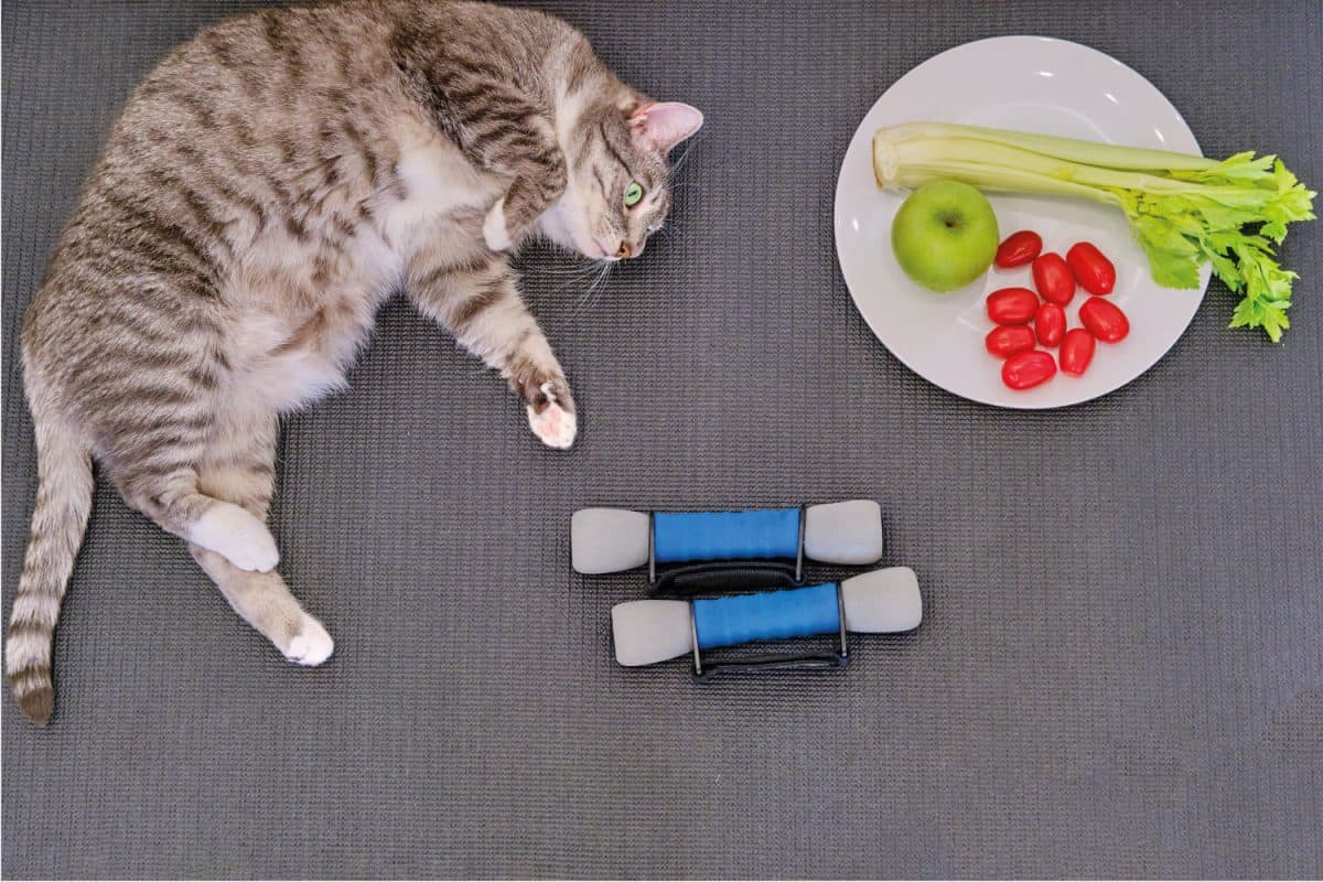 A big fat cat lies on a sports mat next to a plate with an apple and celery