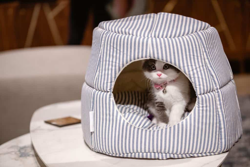 A cute little kitten sleeping in his cozy cat bed house