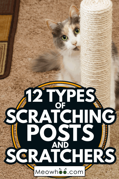 Cat peeking around scratching post. 12 Types Of Scratching Posts And Scratchers