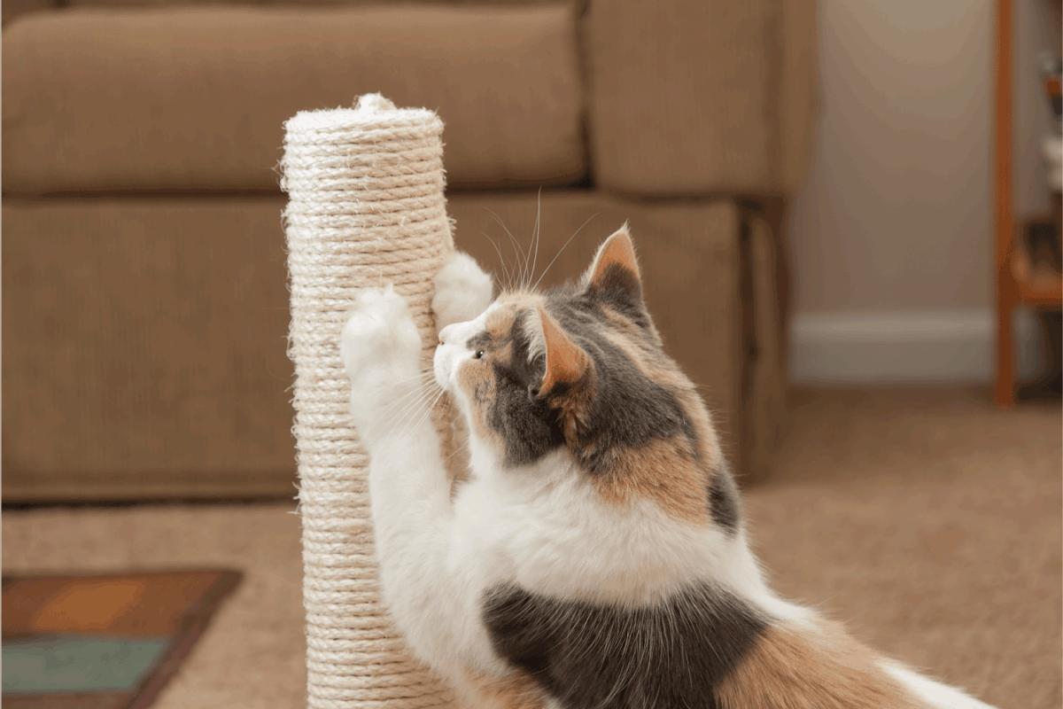 Cat scratching closeup