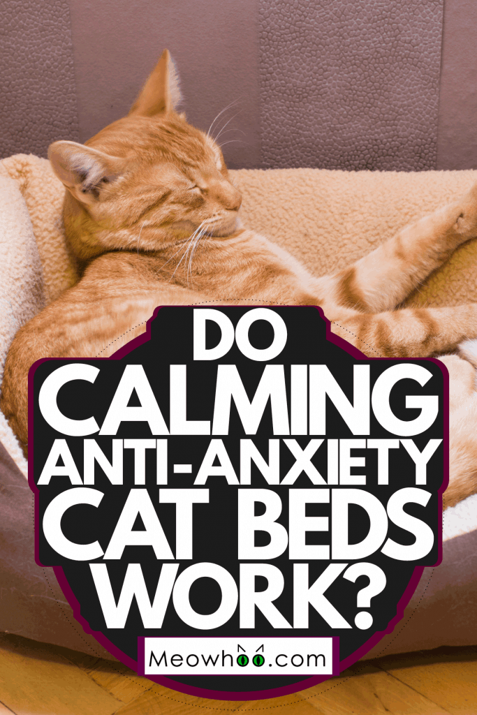 A cat sleeping in his calming cat bed, Do Calming Anti-Anxiety Cat Beds Work?