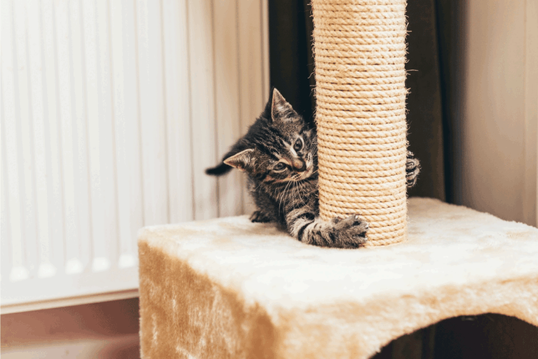 Feisty little kitten on the scratching post. 12 Types Of Scratching Posts And Scratchers