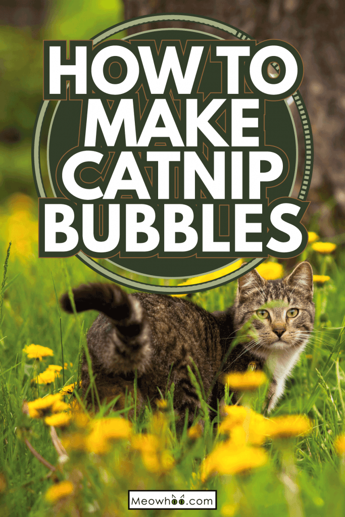 Funny lovely little girl and a cat, blowing soap bubbles. How To Make Catnip Bubbles