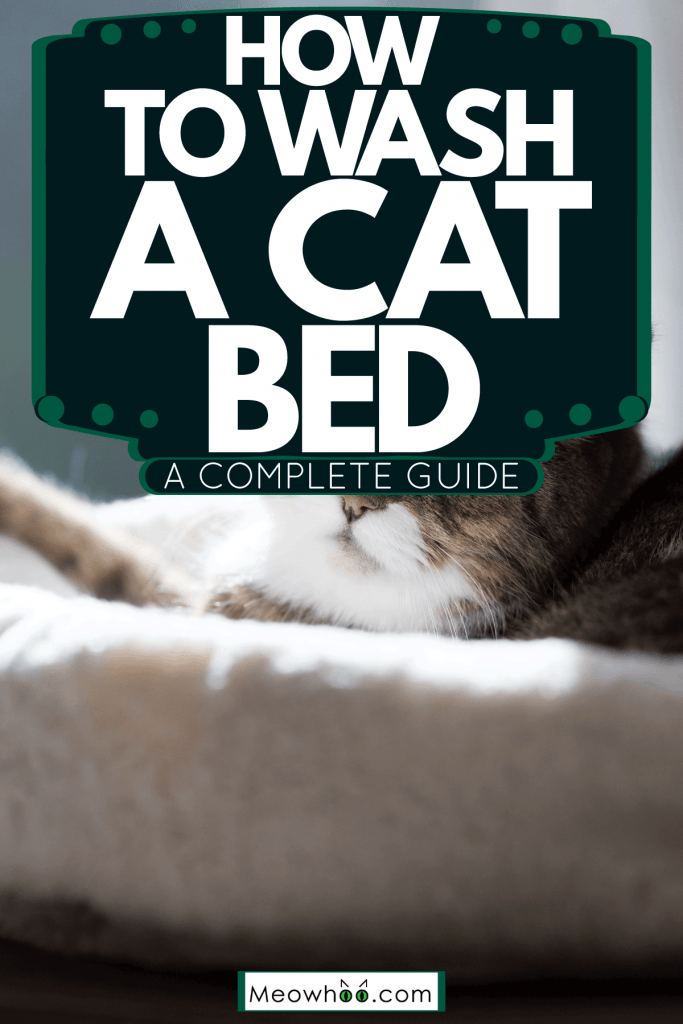A grumpy looking Persian cat sleeping in his white cat bed, How To Wash A Cat Bed [A Complete Guide]