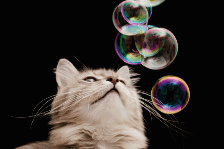 How To Make Catnip Bubbles