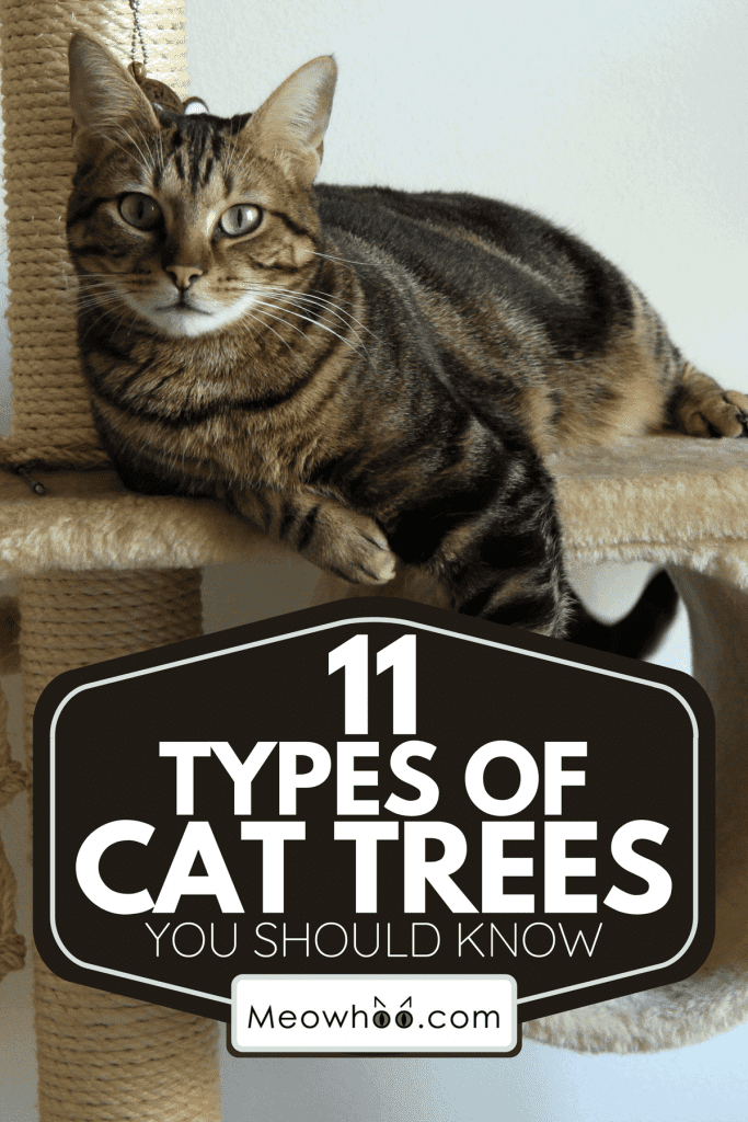 A brown tabby cat on its tree, 11 Types Of Cat Trees You Should Know