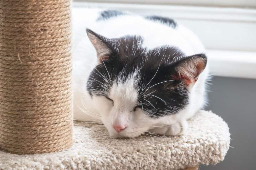 A black and white cat sleeping on a cat tree