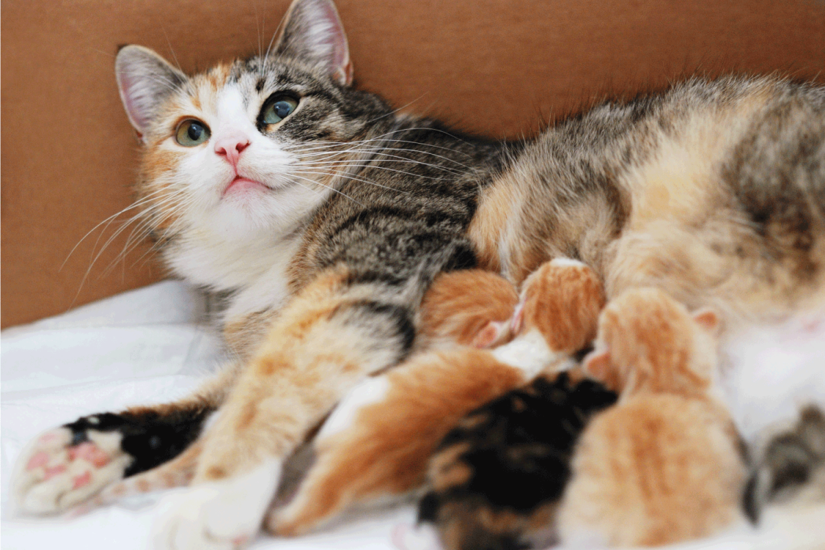 Cat breastfeeding little kittens