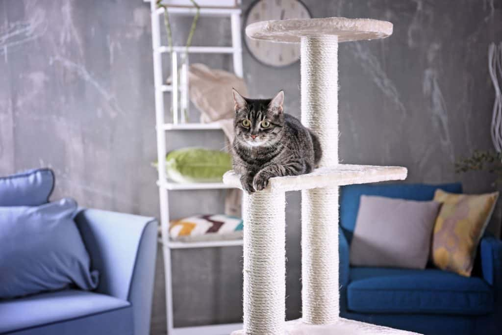Cat sitting on tree, Where To Place A Cat Tree
