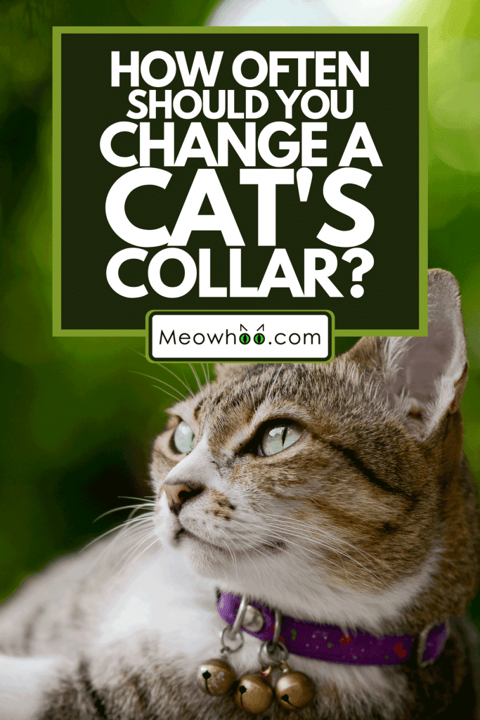 A tabby cat laying on granite table with greenish background, How Often Should You Change A Cat's Collar?