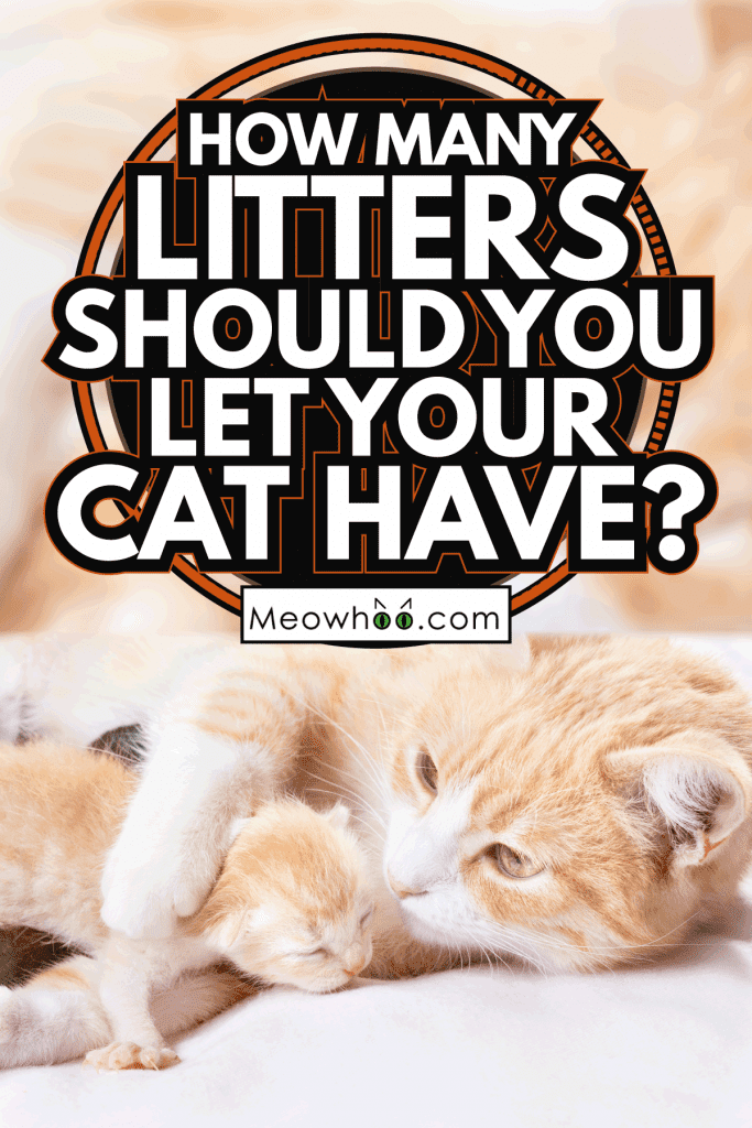 cat taking care of her litter, closu up photo. How Many Litters Should You Let Your Cat Have