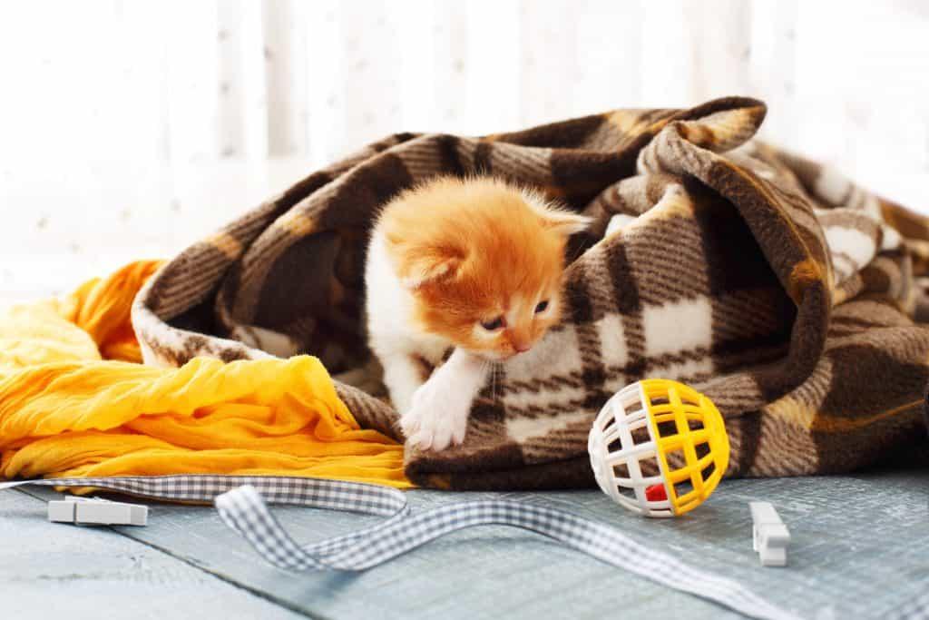 Red orange newborn kitten in a plaid blanke